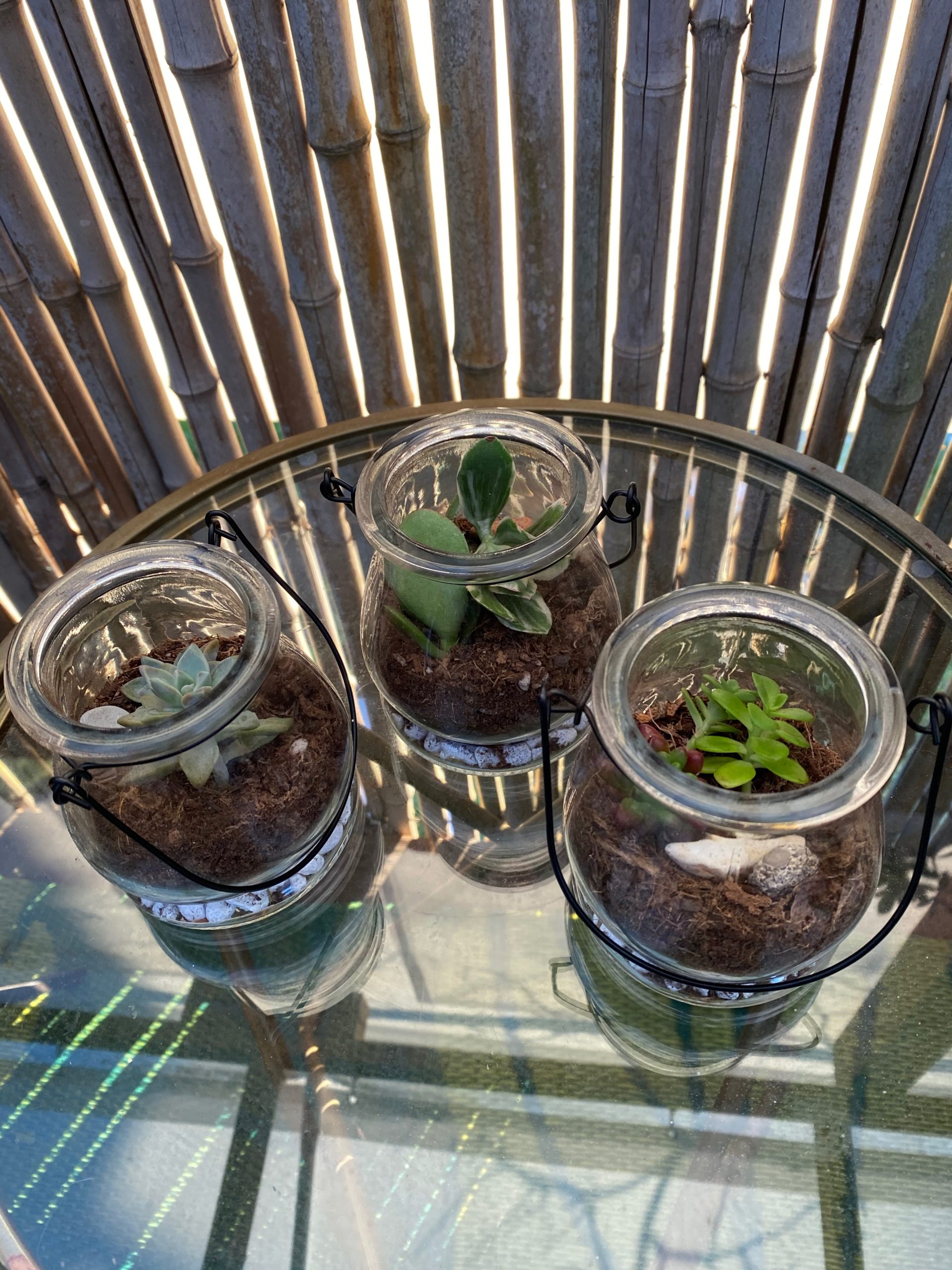 three glass terrariums
